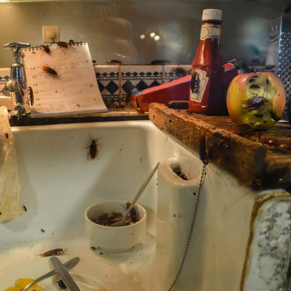 zaniedbane mieszkanie po zmarłej osobie w Lubinie